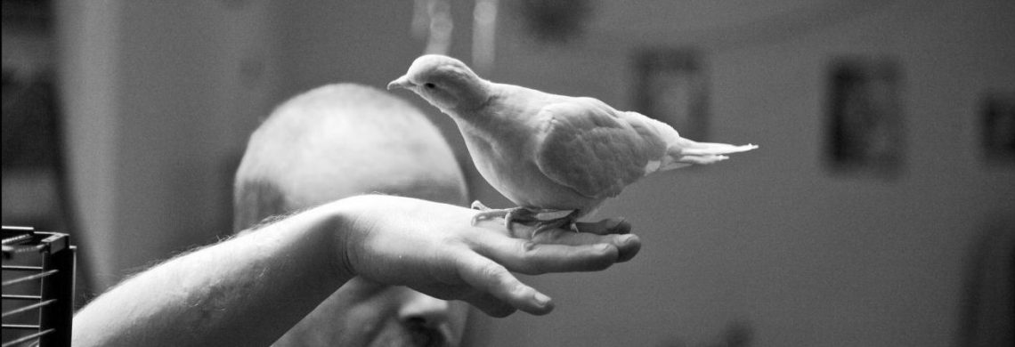 Médiation animale en milieu carcéral